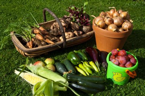 Андрей Туманов: погребок для богатого урожая