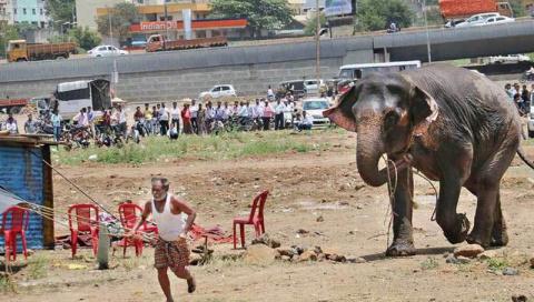 Сбежавший из цирка слон устроил переполох в индийском городе
