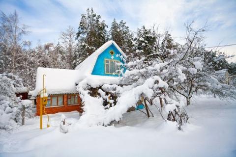 Андрей Туманов: сад в зимних оковах