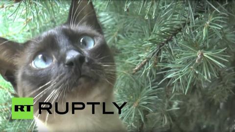 Семён Семёныч — кот из Ульян…