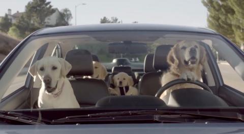 Subaru выпустила автомобиль для собак
