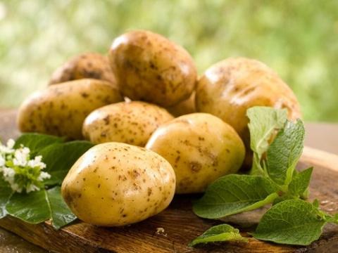 Картошка – народная неотложка
