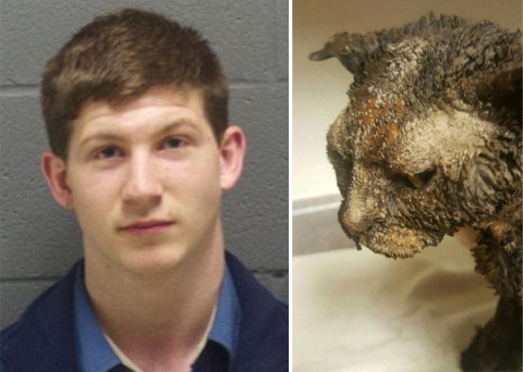 19-летний садист, издевавшийся над котенком, пришел сам сдаваться в полицию