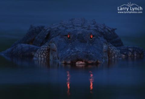 Они сделали снимки ночного болота. Когда я увидел, что им удалось запечатлеть - я дрожал от страха!