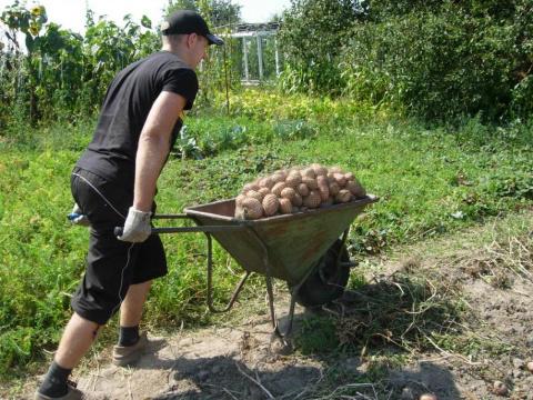 Картофельный бизнес: во сколько обходится «своя» картошечка
