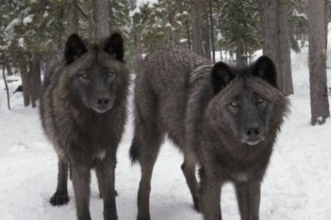 Душераздирающие истории про людей, оказавшихся один на один против диких животных