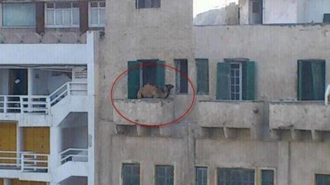 Что только не хранят люди на балконах