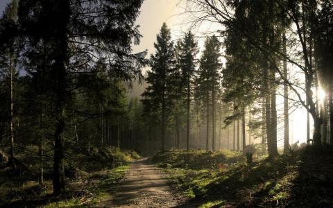 Почему пахнет лес