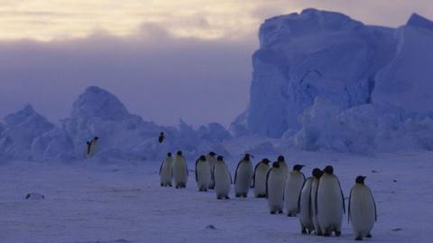 Ученые: от антарктических ль…