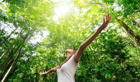 Энергия деревьев – союзница человека
