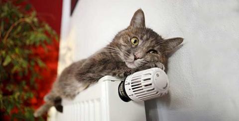 В Риге призывают обогревать зимой дворовых котов