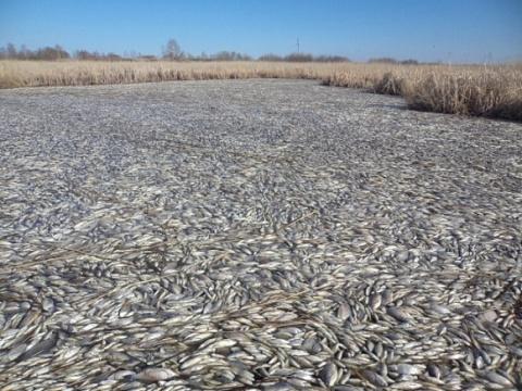 Массовая гибель рыбы произошла в озере Кунашак в Челябинской области