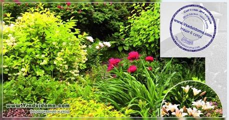 Цветник красивый круглый год (фото)