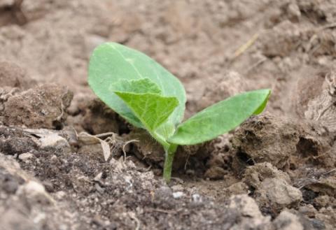 Как вырастить тыкву большую-пребольшую