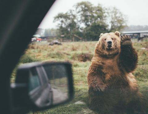 По Вокзальной магистрали катался медведь на сноуборде