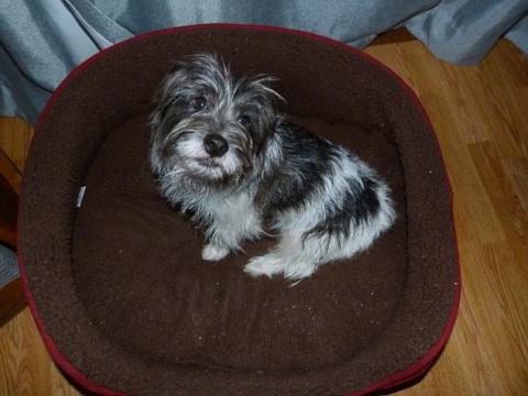 В Шотландии нашли собаку, которая на 9 дней застряла в кроличьей норе
