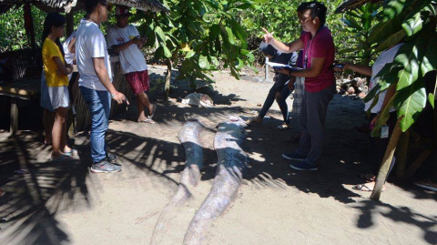 На Филиппинах поймали глубоководных рыб-змей. Улов не на шутку встревожил сейсмологов