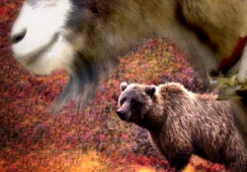Только политика. Козел и Медвежонок..;))