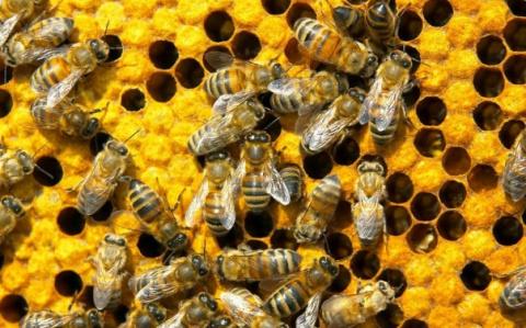 США против коррупции — пчёлы против мёда