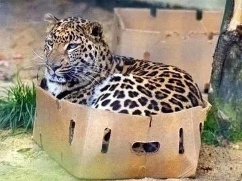 Размер не имеет значения: кошки всегда остаются кошками!