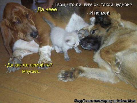 Подборка новых котоматриц для всех!)