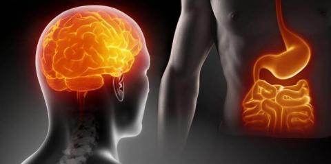 Два лучше одного: второй мозг человека
