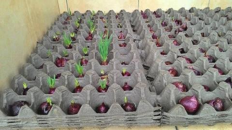 Интересный способ выращивани…