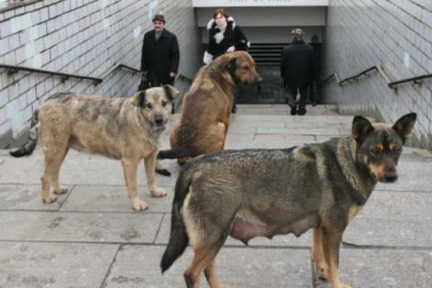 Стая бродячих собак спасла д…