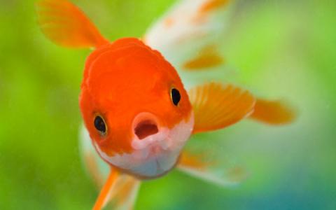 Рыбья память. Константин Кеворкян