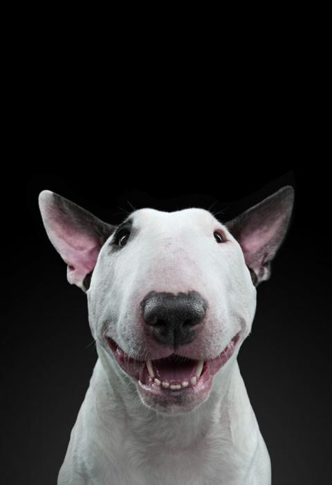 Незаурядные портреты собак фотографа Александра Хохлова