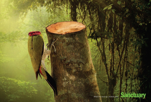 Смерть в лесу