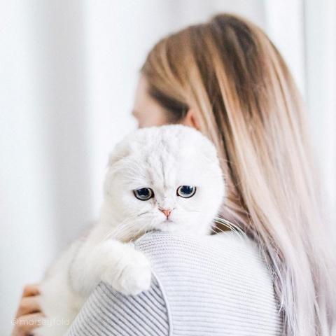 Простите-извините! Этот котенок всегда выглядит так, будто очень сожалеет о чем-то