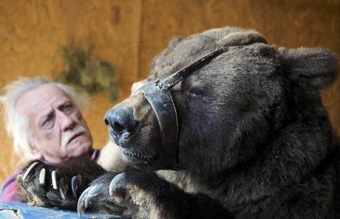 Жуткие скитания цирковых медведей, которые уже не могут участвовать в шоу
