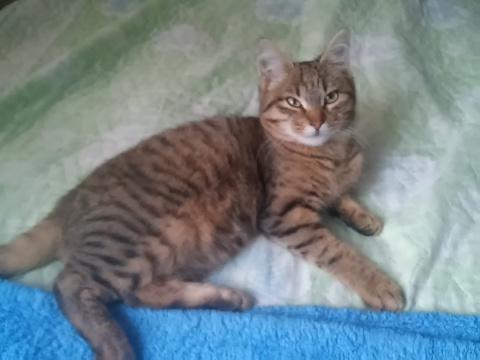 К мужу на колени заполз маленький бездомный котенок и уснул...