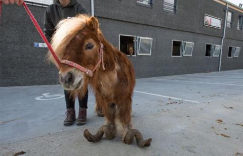 Копыта пони, которые не обре…