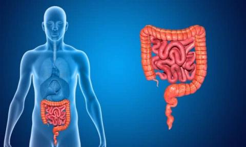 Кишечная непроходимость – симптомы, лечение, диагностика