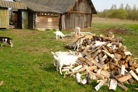 И не про коз совсем, а про к…