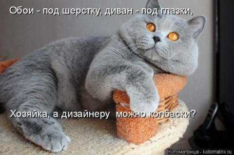 Самые смешные котоматрицы за…