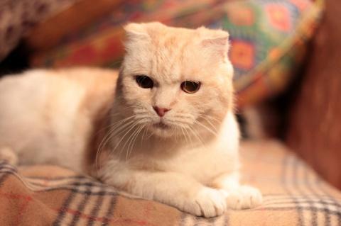 Обычная кошка ищет особенных родителей!