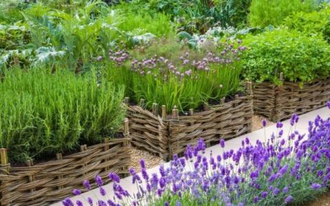 Бордюры и изгороди для огорода из целебных трав