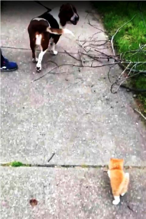 Уличный котеныш так мечтал о…