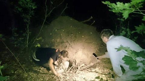 Щенок тихо лежал в лесной ям…