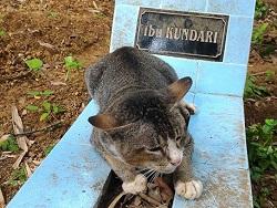 Убитый горем кот больше года…