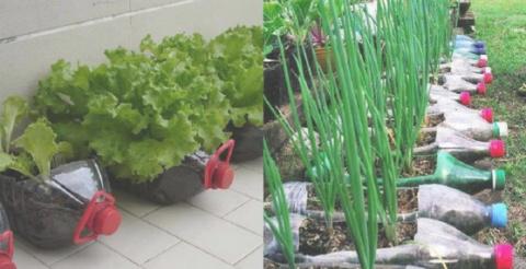 Овощи можно выращивать не на…
