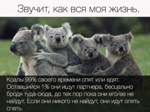 КЛАССНЫЕ ФОТО С ЮМОРОМ