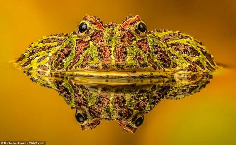 Победители конкурса фотографий животных Creatures Great and Small