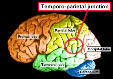Ученые нашли в мозгу место, …
