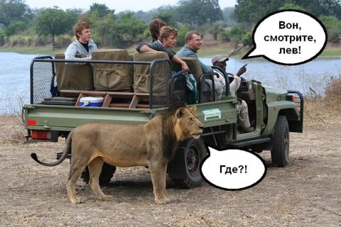 В африканской саванне стоит …