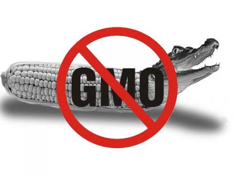 О ГМО