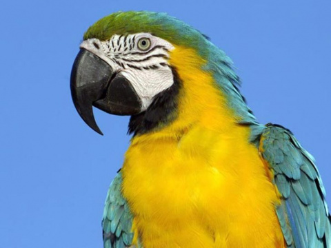 Покупая попугая, мой дядя и …